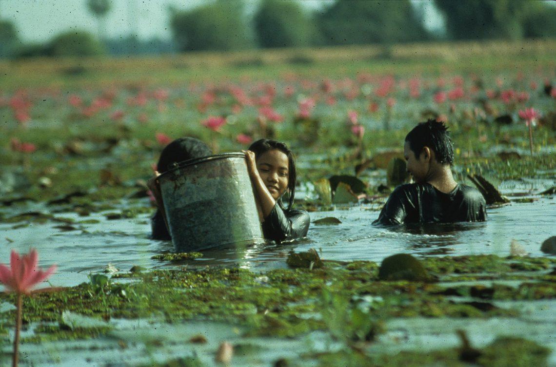 Das Reisfeld (1994)